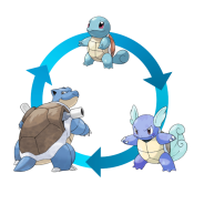 Squirtle-Evolution